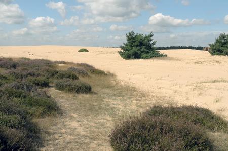 veluwe: Landscape in National Park Hoge Veluwe in the Netherlands.