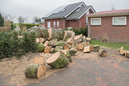 sawn: NETHERLANDS - LEMMER - MEDIA FEBRUARI 2016: Transformed sawn tree on a resort. Editorial