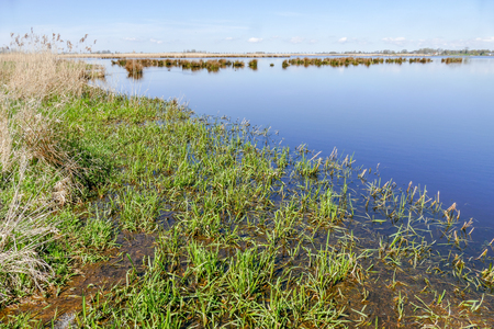 plassen: Marsh Landscape in nature wetland Green Jonker at Nieuwkoopse plassen in the Netherlands.
