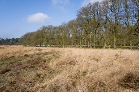 Grass landscape with oak trees in the Nationaal Park Hoge Veluwe, Netherlands. Stock Photo
