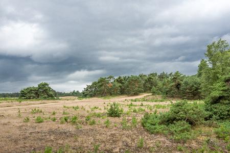 Landscape with threatening clouds on the National Park Hoge Veluwe, Netherlands. Stock Photo