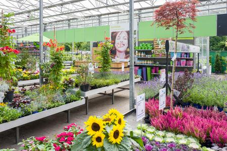 NETHERLANDS - VOORSCHOTEN - AUGUST 27, 2017: Plants in an Intratuin garden store in Voorschoten, Netherlands.