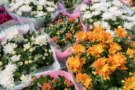 Chrysanthemum plants packaged in plastic in an flower shop.