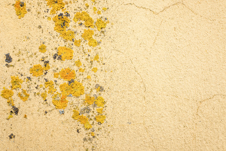 Wall with lichen.