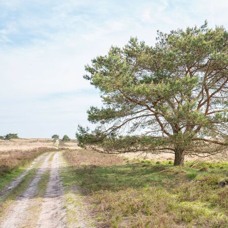 Path on the heath in Elspeet in the Netherlands.