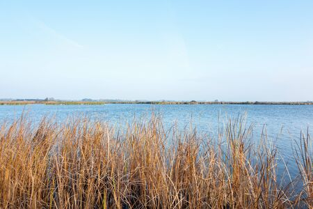 View at the nature reserve Sondeler Leijen in Friesland in The Netherlands.