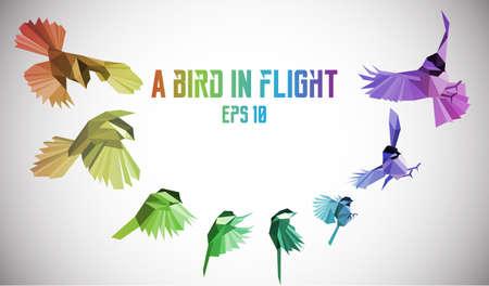 bandada pajaros: pájaro del arco iris en movimiento. Bajo poli Vectores