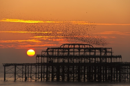 brighton: Flock of starlings over the West Pier in Brighton at sunset, UK