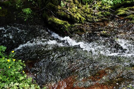 Detail of a torrent in spring