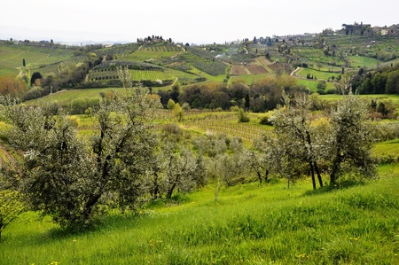 Typical Tuscany landscape in spring, Italy photo
