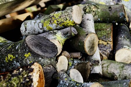Stack of logs photo