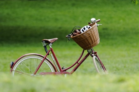 helmet bike: A red bicycle in a park