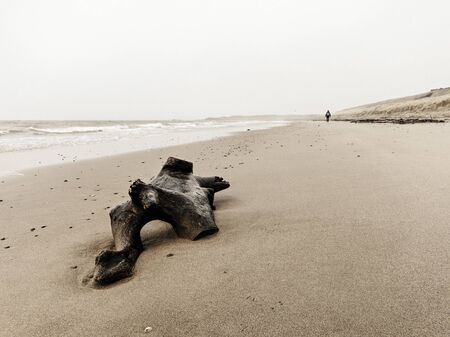 driftwood: Driftwood and a single woman walking on Turnberry beach, Scotland, UK Stock Photo