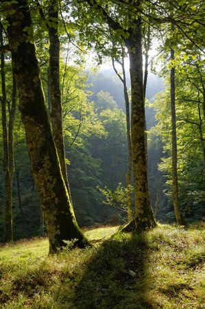 Forest landscape Stock Photo