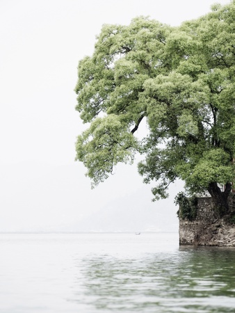 tal: Tree on Barahi Temple island in Pokhara, Nepal, vertical shot