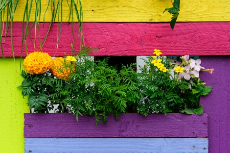 Flowers and colorful painted wooden background photo