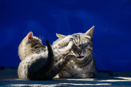 clawing: Madre e il suo gatto kitten Archivio Fotografico