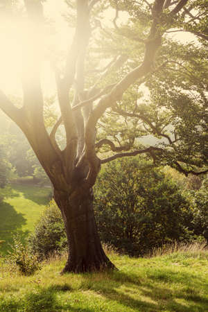 garden key: Tree in a park in the British countryside