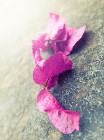 Pink Bougainvillea leaves on a stone background photo