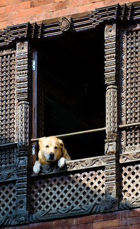 Dog looking out of a window in kathmandu photo
