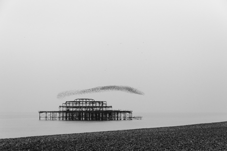 Flock of starlings flying over the west pier in Brighton, UK photo