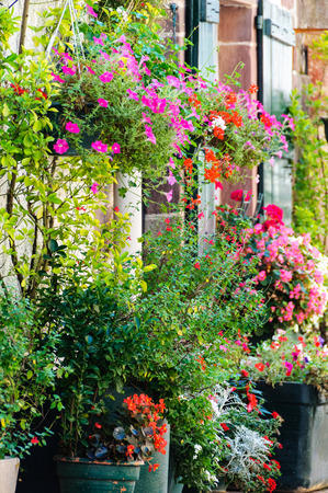ornamental shrub: Flowers outside a house Stock Photo