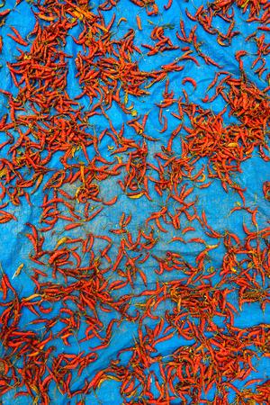 tarpaulin: Red chillis drying on a blue tarpaulin