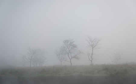 Trees in the fog, winter season photo