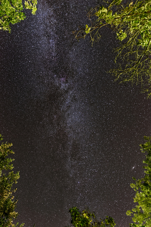 dark skies: The Milky Way, tree branches in the corners