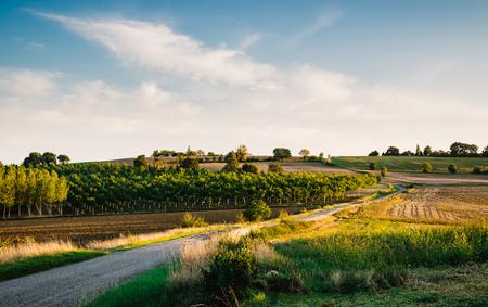 Landweg in Gers, Frankrijk. Film emulatie filter.