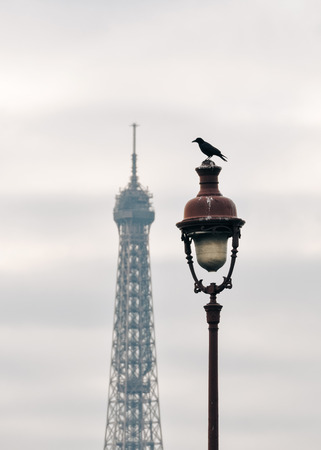 mood moody: A raven on top of street light, the Eiffel Tower in the background in Paris, France