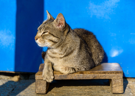 footstool: Cat basking in the sun, blue wall background, in Nepal