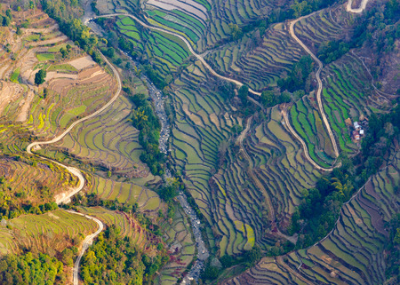 Aerial view of paddy fields near Pokhara, Nepal