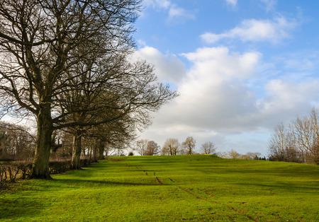 tree farming: Rural landscape in winter in England, UK