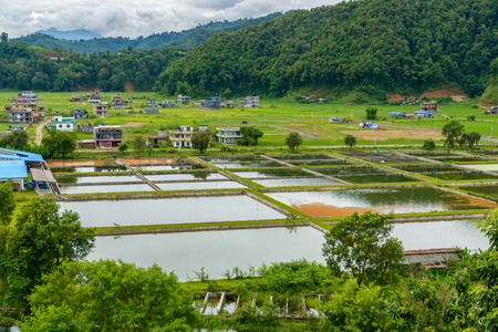 lowlands: Fish farming in the Pokhara valley, Nepal Stock Photo