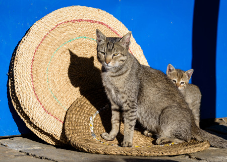 Mother cat and its kitten on round mats