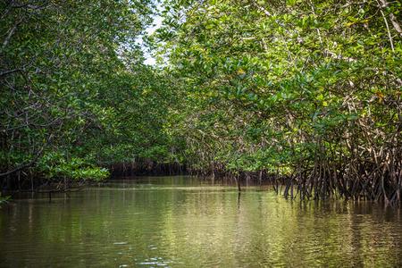 Mangrove op Bintan in Indonesië