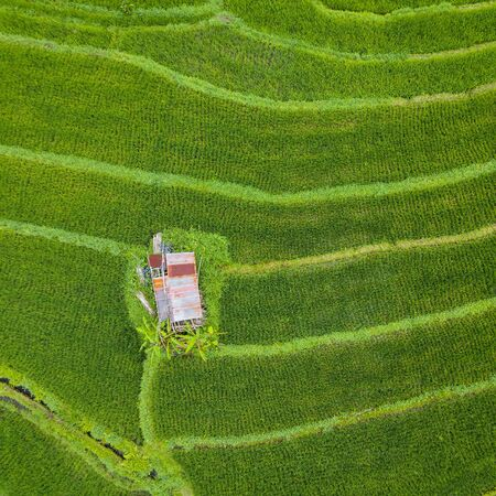 Small hut with rusty tin roof in the middle of paddy fields top down aerial view, In Bali, Indonesia Archivio Fotografico