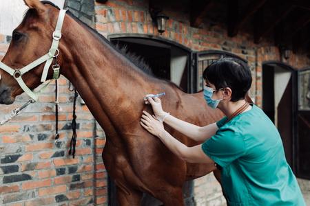 Mujer control veterinario de la salud del caballo en el establo