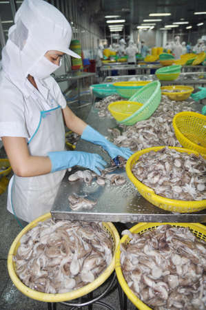 classifying: VUNG TAU, VIETNAM - SEPTEMBER 28, 2011: A woman worker is classifying octopus for export in a seafood processing factory