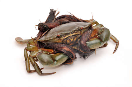 Crab from the Mekong delta on a white background Stock Photo