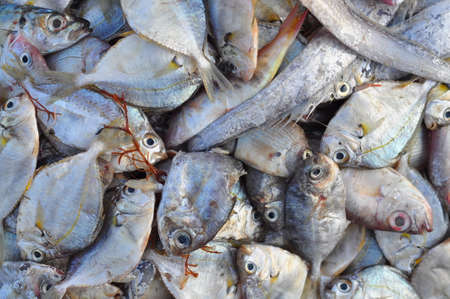 forage: Forage fish in Nha Trang city Stock Photo