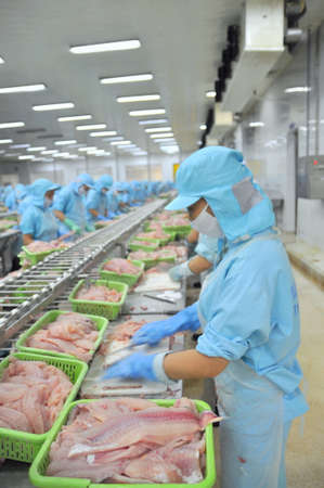 pangasius: CAN THO, VIETNAM - JULY 1, 2011: Workers are filleting pangasius catfish in a seafood factory in the Mekong delta of Vietnam
