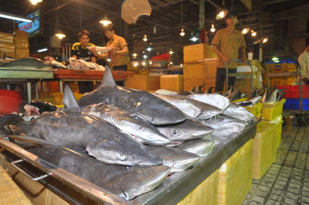 middleman: HO CHI MINH CITY, VIETNAM - NOVEMBER 28, 2013: Sharks are waiting for purchasing at the Binh Dien wholesale night seafood market, the biggest one in Ho Chi Minh city, Vietnam