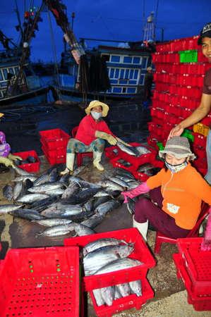 fischerei: Nha Trang, Vietnam - 21. Februar 2013: Frauen, Arbeiter Sammlung und Sortierung der Fischerei in K�rbe nach einem langen Tag die Fischerei in der Hon Ro Seehafen, Nha Trang Stadt