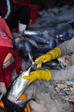 fischerei: Nha Trang, Vietnam - 21. Februar 2013: Frauen, Arbeiter Sammlung und Sortierung der Fischerei in Körbe nach einem langen Tag die Fischerei in der Hon Ro Seehafen, Nha Trang Stadt