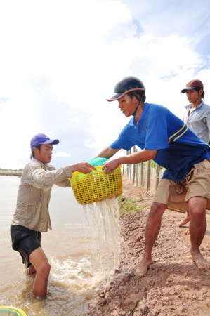 developing country: BAC LIEU, VIETNAM - NOVEMBER 22, 2012: Fishermen are harvesting shrimp from their pond in Bac Lieu city