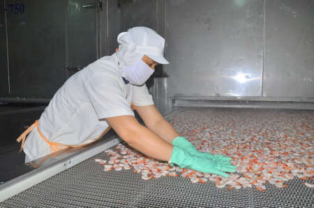 countervailing duty: NHA TRANG, VIETNAM - MARCH 5, 2012: Workers are arranging shrimps in a line to the freezing machine in a seafood factory in Vietnam