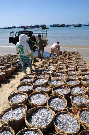fischerei: LAGI, VIETNAM - 26. Februar 2012: Fischerei auf dem Strand in viele K�rbe wartet das Hochladen auf den LKW zum Verarbeitungsbetrieb befindet