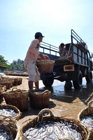 LAGI, VIETNAM - FEBRUARY 26, 2012: Local fishermen are uploading fisheries onto the truck to the processing plant in Lagi beach